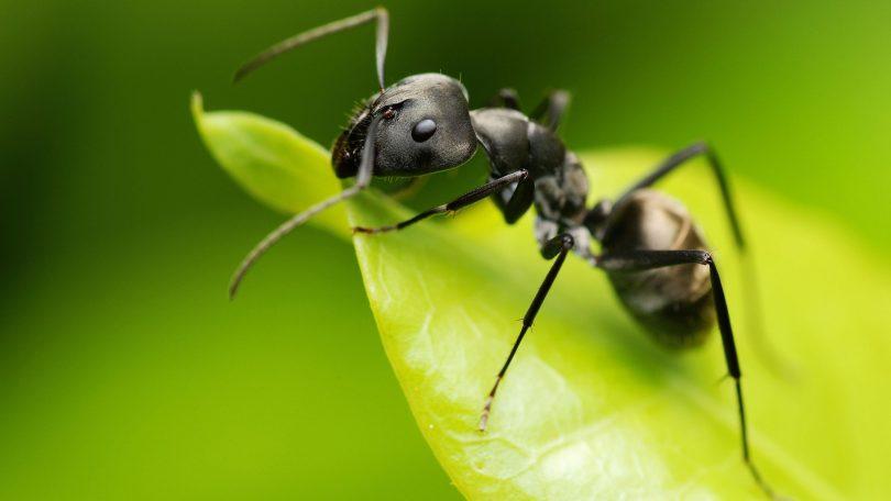 Karınca Duası Oku ve Anlamı