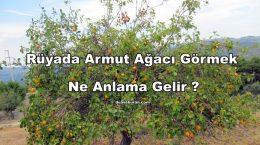 Rüyada Armut Ağacı Görmek Ne Anlama Gelir ?